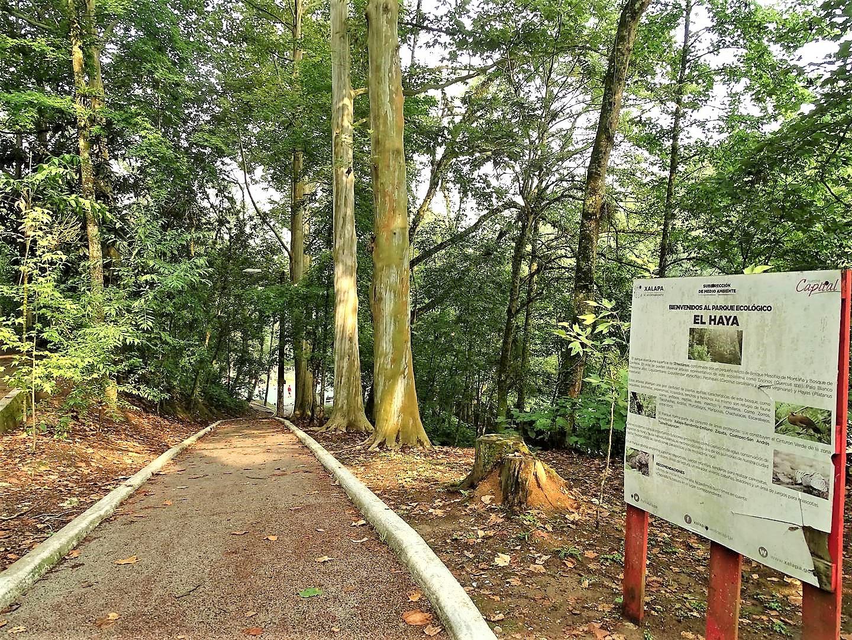 Parque El Haya   Visita Xalapa