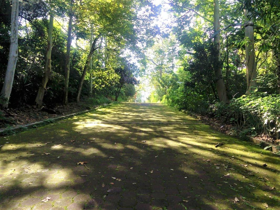 Parque El Haya | Visita Xalapa